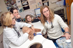 study veterinary medicine in Belarus