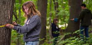 study forestry in Belarus